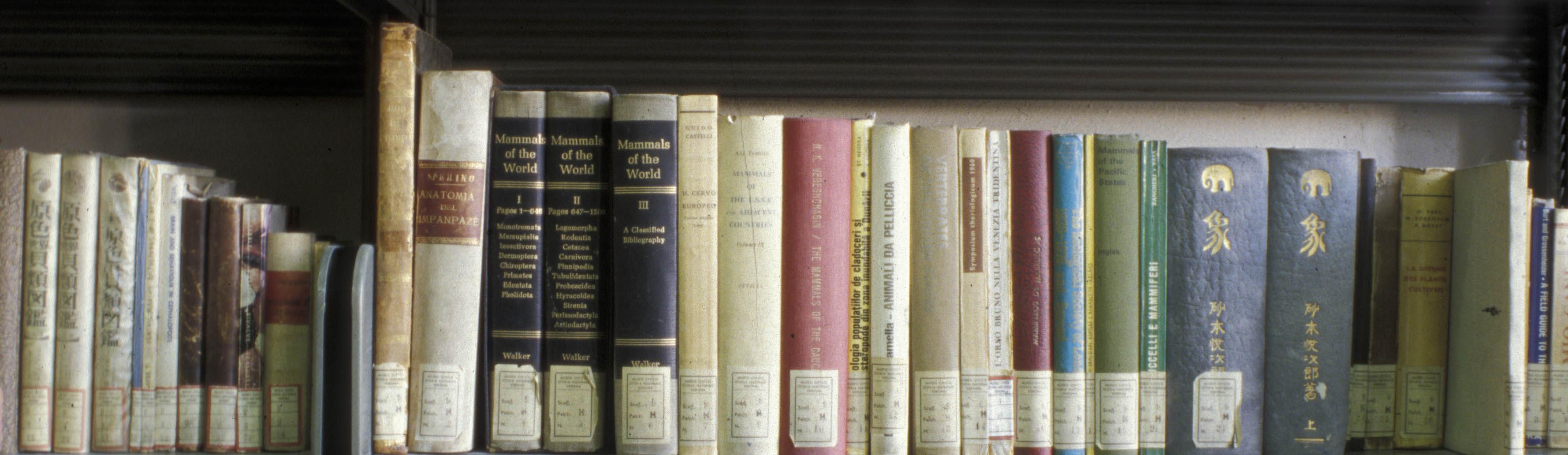 Museo civico di storia naturale archivio bibliografico - Biblioteca porta venezia orari ...